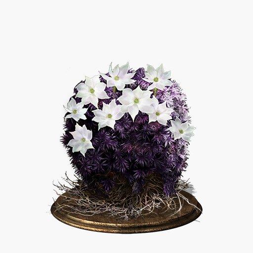 blooming-purple-moss-clump.jpg