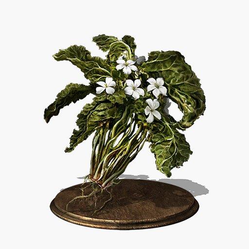 budding-green-blossom.jpg